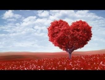 Pureza de coração - 12/02/2020